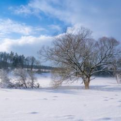 WinterFLP-6